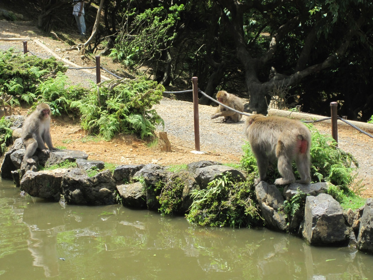 iwatayama monkey park japan guide