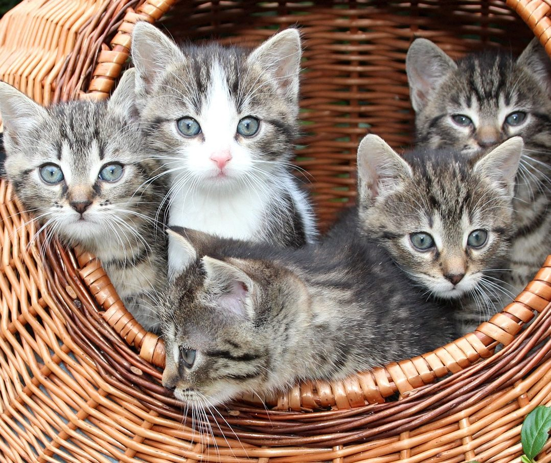 wildlife shelter and foster carer authorisation guide