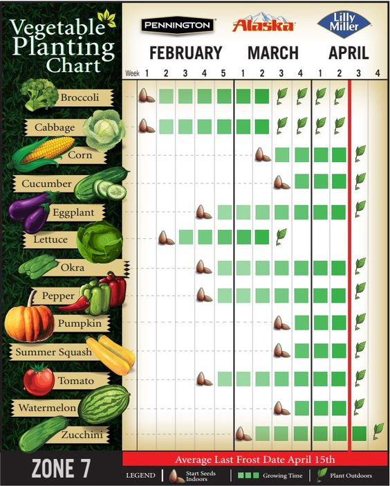 spring planting guide zone 6