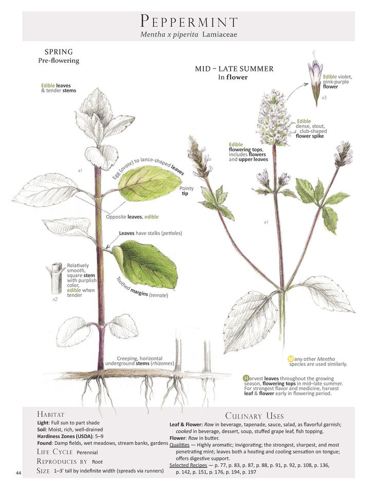 house plant identification guide by leaf