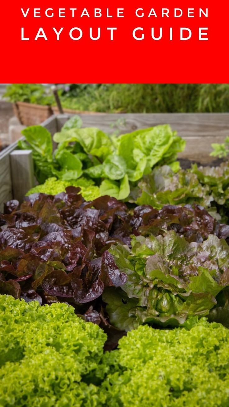 vegetable garden planting guide sydney