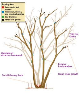 basic guide to pruning plants