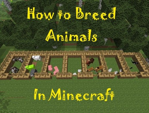 horse academy game breeding guide