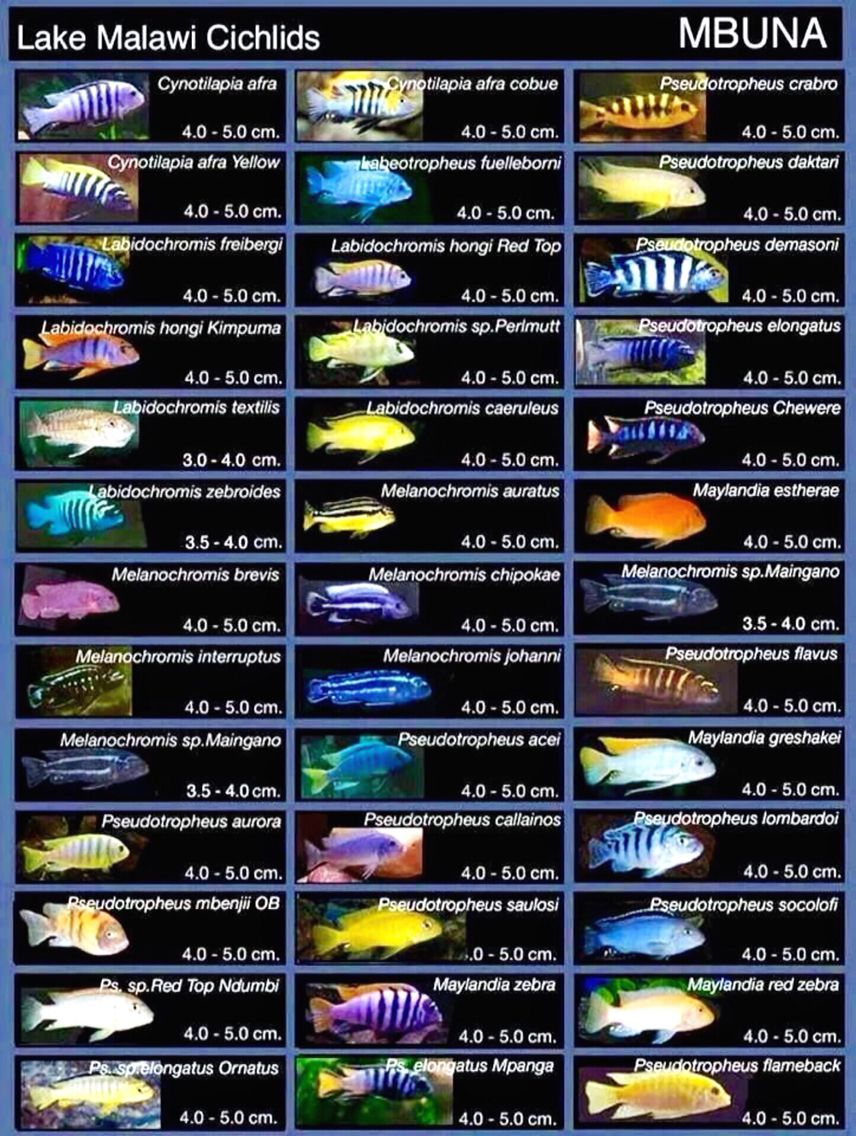 south african freshwater fish guide