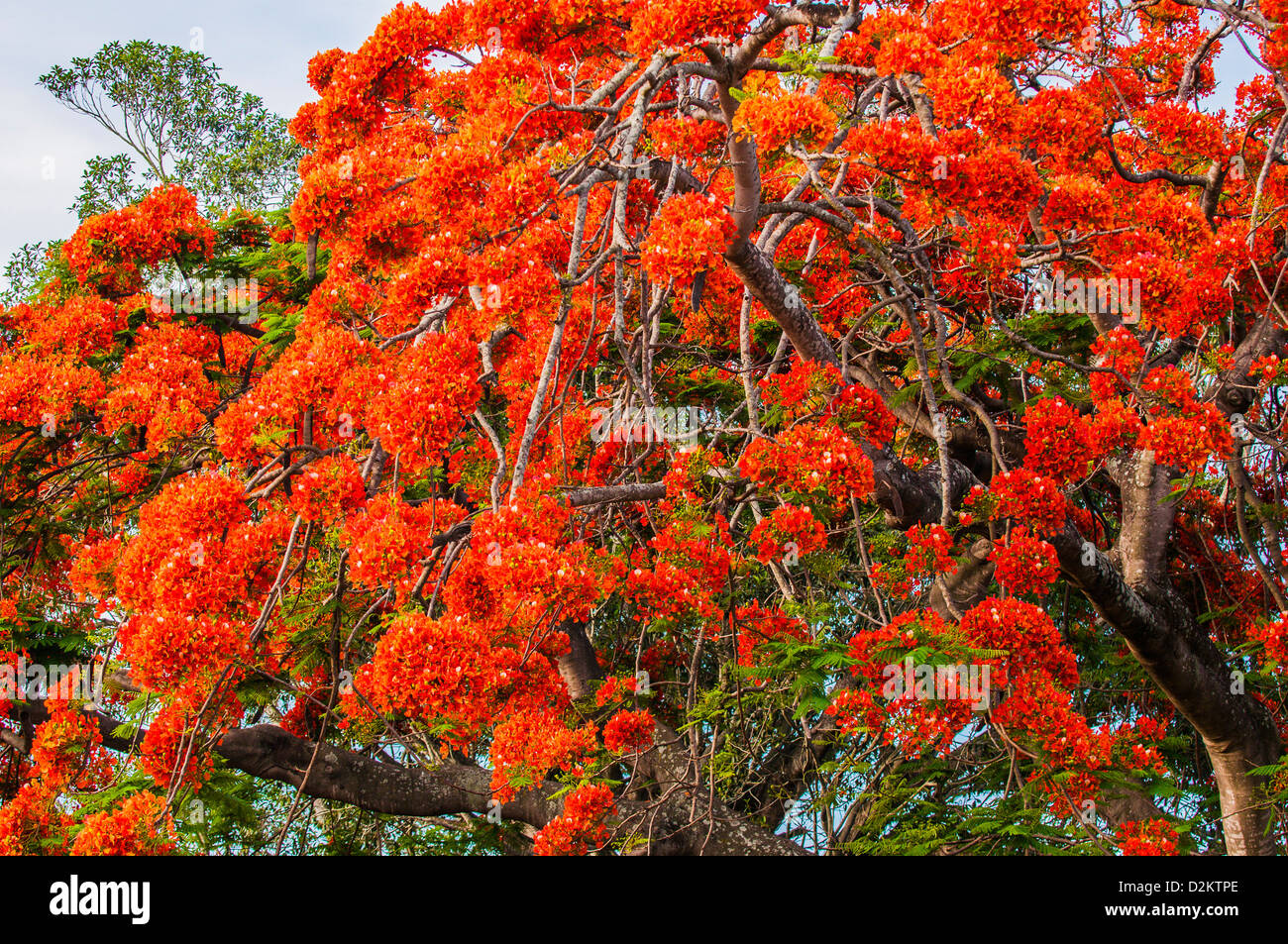 colors and seasons guide of flower in australia