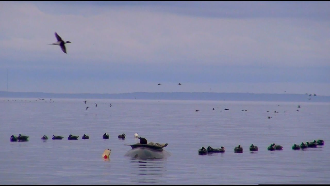 maine sea duck hunting guides