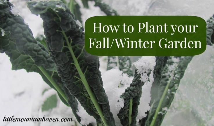 winter vegetable planting guide nz